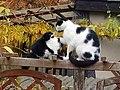Katzen - Familie.jpg