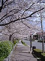 Kawabata Street in the spring - panoramio.jpg