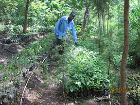 Kerio Valley tree nursery.jpg