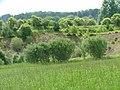 Kiesgrube Vegetation - panoramio.jpg