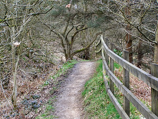 Kingfisher Trail, Clifton Country Park - geograph.org.uk - 1775380