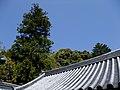 Kiyoshi Maitani, Takarazuka-shi, Hyōgo-ken 665-0831, Japan - panoramio - familiarNS (1).jpg