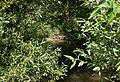 Kladinský Creek by Žirov.jpg