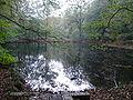 Klosterihlowfisch2.jpg