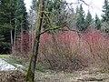 Kolory wczesnej wiosny... - panoramio.jpg