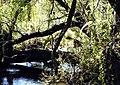 Kooloonbung Creek Nature Park.jpg