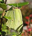 Korpilahti - butterfly.jpg