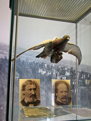 Julius Neubronner - Stadtmuseum Kronberg