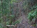 Kumano Kodo Kogumotorigoe World heritage41.JPG
