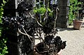 Květiny - panoramio (1).jpg