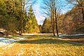 Kvetoucí sněženky v PP Sněženky ve Vysokém lese 15.jpg