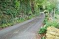 Lôn a garlleg gwyllt - Lane and wild garlic - geograph.org.uk - 414970.jpg