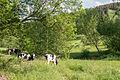 Lügde - 2015-05-24 - LIP-021 Emmertal (am Eschenbach) (7).jpg