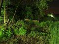 LED-Leuchten im Wald P5240148.JPG