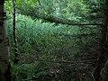 LOLAIR NATURAL RESERVE IFF-634 IZ5GST-IX1 IU5AXT-IX1 - panoramio (2).jpg