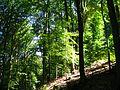 LSG 378517, Stadt Kassel, Quelberg, 3, Wolfsanger-Hasenhecke, Kassel.jpg