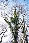 LSG H 00070 Calenberger Leinetal - Alt Calenberg (33).jpg