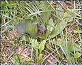 LSG L2a1 (Neukloster-Warin-Blankenberg) Wald bei Warin - eine Maus versteckt sich.jpg