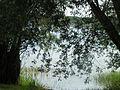 Lac du Der-Chantecoq (05).jpg