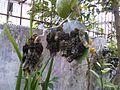 Lagartas no limoeiro2.jpg