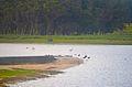 Laguna de Rocha with birds.jpg