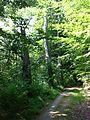 LakeVallum-tree ruins-29.05.16-OleFrimer.jpg