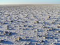 Lake Eyre 2004 - panoramio (1).jpg