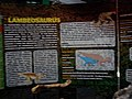 Lambeosaurus with Hadrosaur fossils.jpg