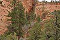 Landscape; Zion National Park (3443757932).jpg