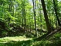 Landschaftsschutzgebiet Gestorfer Lößhügel (16).JPG