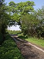 Lane from West Raddon - geograph.org.uk - 431097.jpg