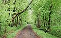 Langes Tannen Waldweg 08.jpg