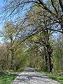 Las Sołtysowicki 014.jpg