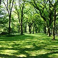Lawn off The Mall, in Central Park, Manhattan.jpg
