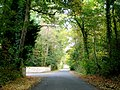 Leafy lane by the entrance to Toddington Manor - geograph.org.uk - 1537627.jpg