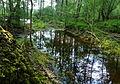 Lehrter Naturdenkmal Mergelstich (ND-H 160) 01.JPG