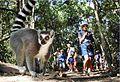 Lemur with people behind.jpg