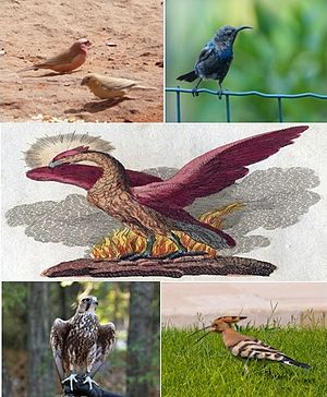 قائمة طيور الشام ويكيبيديا