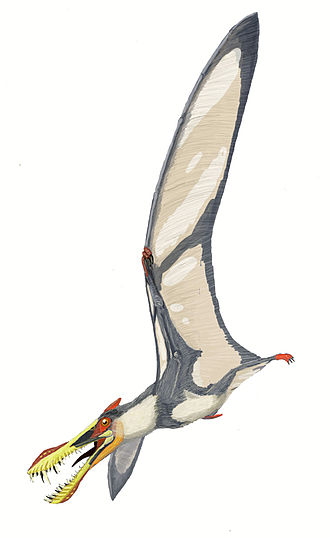 Jiufotang Formation - Liaoningopterus
