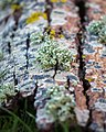Lichen On Fallen Wood (184702661).jpeg