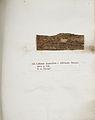 Lichenes Helvetici IX X 1833 026.jpg