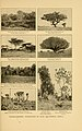 Life-histories of African game animals (6254861458).jpg