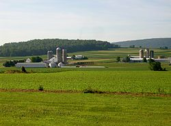 Dairy farms in Limestone Township