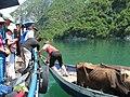 Liqeni i Komanit 2012 (24).jpg