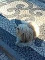 Lisboa, Portugal (40934829032).jpg