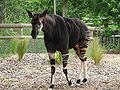 London Zoo 00886.jpg