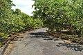 Long Phước, tx. Phước Long, Bình Phước, Vietnam - panoramio (9).jpg