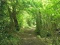 Long distance footpath heading through Warren Copse - geograph.org.uk - 1325126.jpg