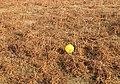 Long distance litter - geograph.org.uk - 700979.jpg