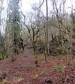 Long disused woodland - Ellwood - Feb 2014 - panoramio.jpg